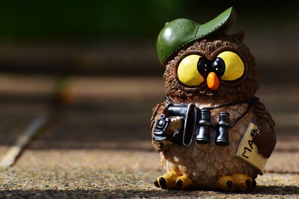 owl-photographer-photograph-tourist-binoculars-2